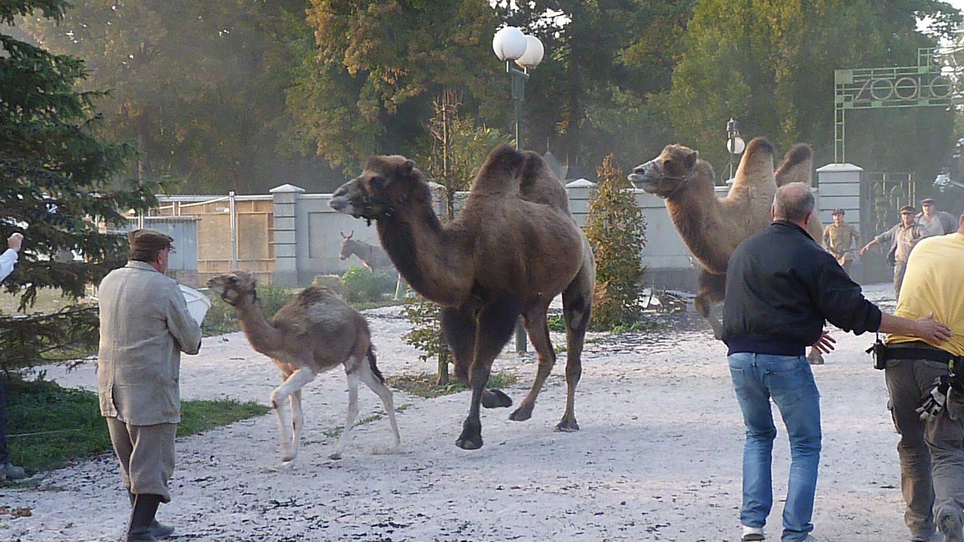 Dromedár pro film a reklamu - Exotická zvířata natáčení