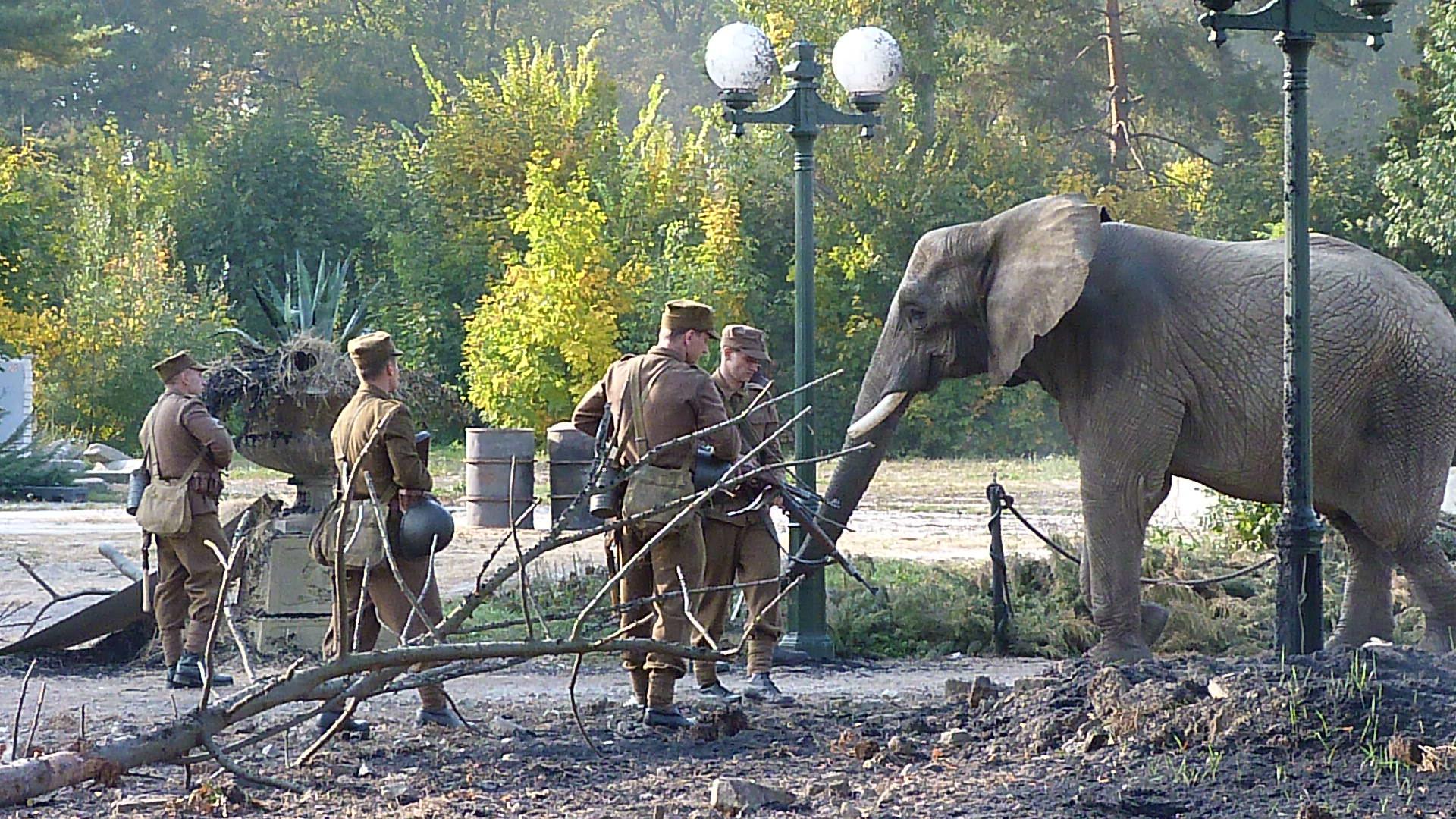 zvířata pro reklamu slon, natáčení se zvířaty