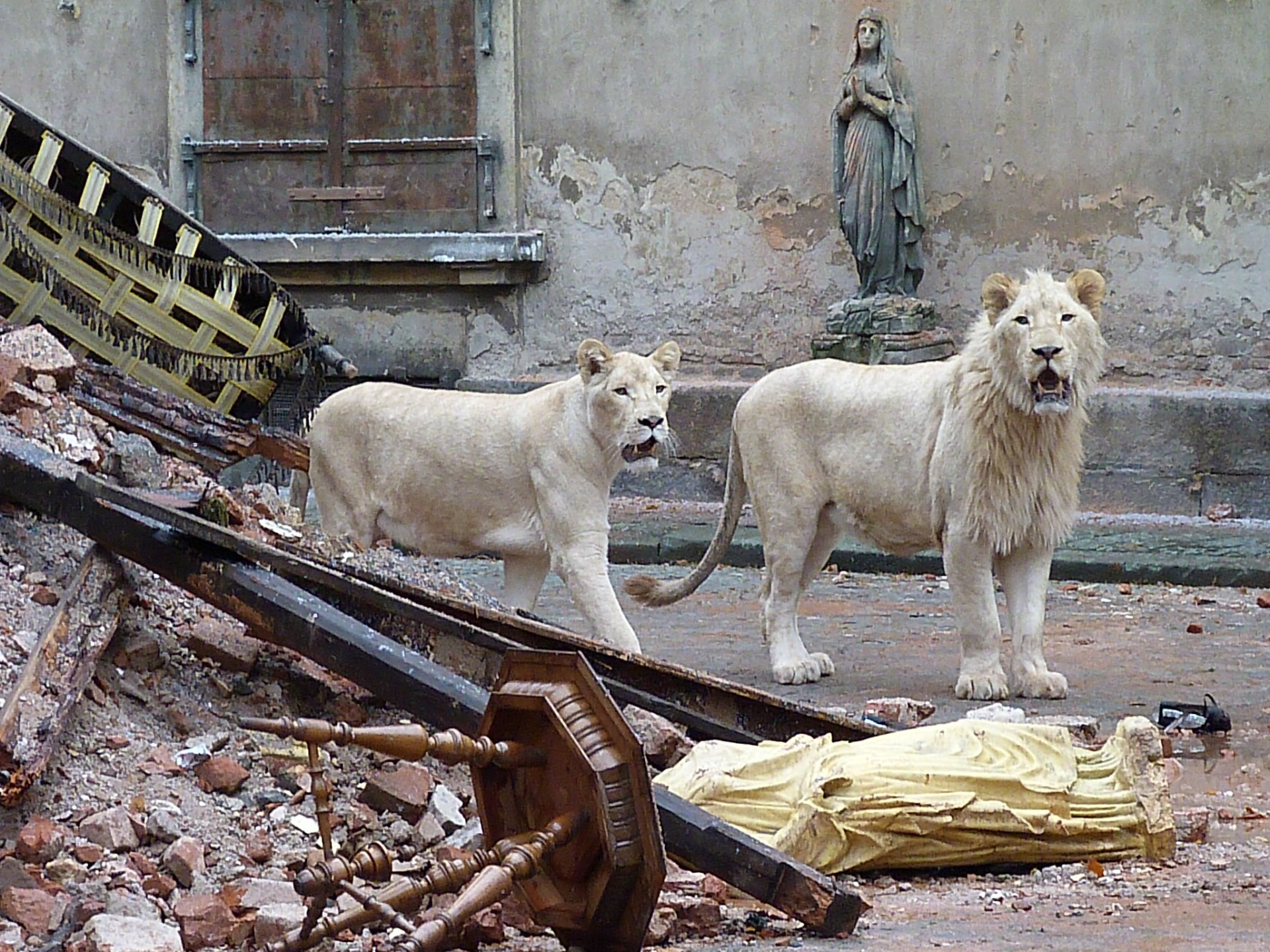 animals exotic czech team place republic dangerous filming lions hundred trained prepared ludvik took four than