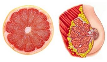 Grapefruit, pomeranče a dalších citrusy připomínají ženské mléčné žlázy a pomáhají pohybu lymfy (tekutina, která koluje v lymfatickém systému) do prsou a zpět! Grapefruity obsahují látky zvané limonoidy, u kterých se ukázalo, že zabraňují vzniku rakoviny u laboratorních myší a v ženských prsou.