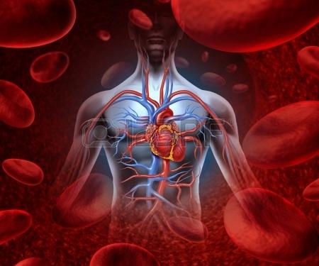 Naše srdce, jehož velikost je o něco větší než pěst, provádí během života gigantickou práci.