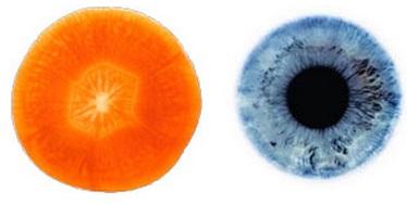 Z obrázku je velice patrné, že nakrojená mrkev vypadá dost podobně jako oko. Dokonce se vyznačuje jistými vzorci, které připomínají zornici a duhovku! Barvivo beta-karoten, který dodává mrkvi její výraznou barvu, pomáhá udržovat zdravý zrak, jak určitě víte. Dále chrání proti vývoji šedého zákalu a dalším onemocněním očí.