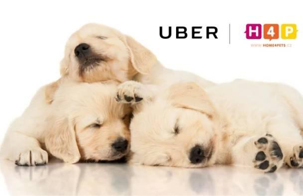 Váš den patří vám Začněte jezdit se službou Uber Uber nabízí nejjednodušší způsob, jak se dostat z bodu A do bodu B. Stačí jedno klepnutí a auto dorazí přímo k vám. Řidič ví přesně, kam dorazit. A platba je zcela bezhotovostní.