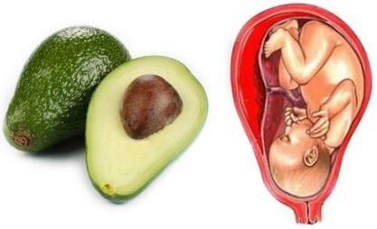 Avokádo je ve tvaru dělohy a děložního čípku. Konzumace avokáda vede k vyváženosti hormonů a slouží jako prevence rakoviny děložního čípku! A hádejte co? Stejně jako trvá 9 měsíců dítěti, aby se v děloze plně vyvinulo, tak avokádu trvá přesně 9 měsíců pro vyvinutí z květu do zralého ovoce