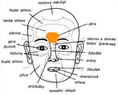 Diagnostická zóna jater a žlučníku se nachází mezi obočím nad kořenem nosu
