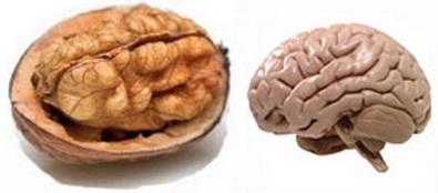 Vlaššké ořechy jsou si až nápadně podobné s lidským mozkem. Jsou označovány za jeden z nejlepších zdrojů pro výživu mozku. Jsou skvělým zdrojem omega-3 a mají více antioxidantů, kyseliny listové (vitamin B9) a vitamínu E než kterékoliv jiné ořechy.