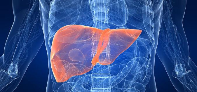 Liver is one of the most important organs in the human body and is involved in at least 500 bodily functions.