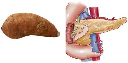 Batáty jsou nápadně podobné slinivce břišní. V batátech se přirozeně vyskytuje vitamin B6 u něhož studieprokázali, že zabraňuje rozvoji rakoviny právě u slinivky břišní. Obsahuje velké dávky beta-karotenu (v jednom batátu až 187 procent doporučené denní dávky!), který také působí preventivně proti rakovině slinivky.