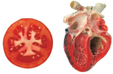 Rajče připomíná orgán srdce více než jakákoliv jiná potravina. Obsahuje látku lykopen, která působí jako antioxidant při srdečně-cévních onemocněních. Bylo prokázáno, že konzumace lykopenu pomáhá snižovat riziko výskytu srdečních onemocnění. Rajčata jsou také skvělým zdrojem vitaminu C, který má podle některých studií také vliv na zdraví srdce.