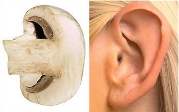 Plátek houby má podobný tvar jako lidské ucho a houby mají pozitivní vliv na zdravý sluch. V menší míře obsahují vitamin D, který slouží preventivně proti ztrátě sluchu. Ohledně vitaminu D připravuji v blízké době samostatný článek, jelikož toto téma je poněkud složitější.