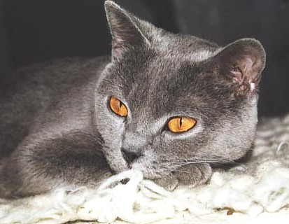 Kočky jsou kouzelní tvorové, jejichž energie, která je větší než jejich těla, ovlivňuje lidi, jejich území i okolí. Když se nám kočka otře o nohu, není to vyjádřením náklonnosti, nýbrž nám nabízí svou pozitivní energii. Pokud ji odženeme, tak tuto energii blokujeme.