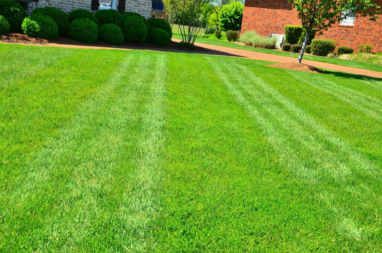 Sekání trávy - úklid Foist