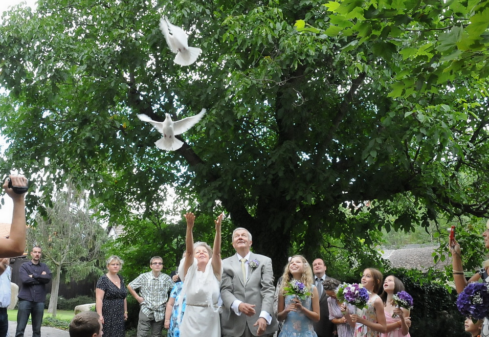 wedding doves release 2