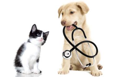 Pojištění VitaProFin s.r.o.