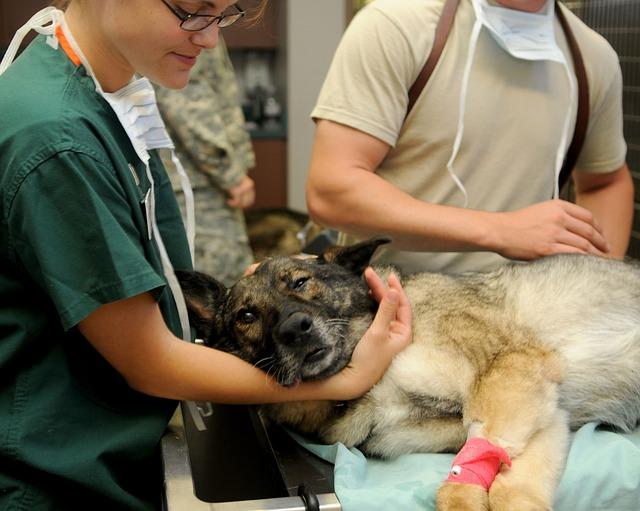 Pojištění zvířat VitaProFin s.r.o.