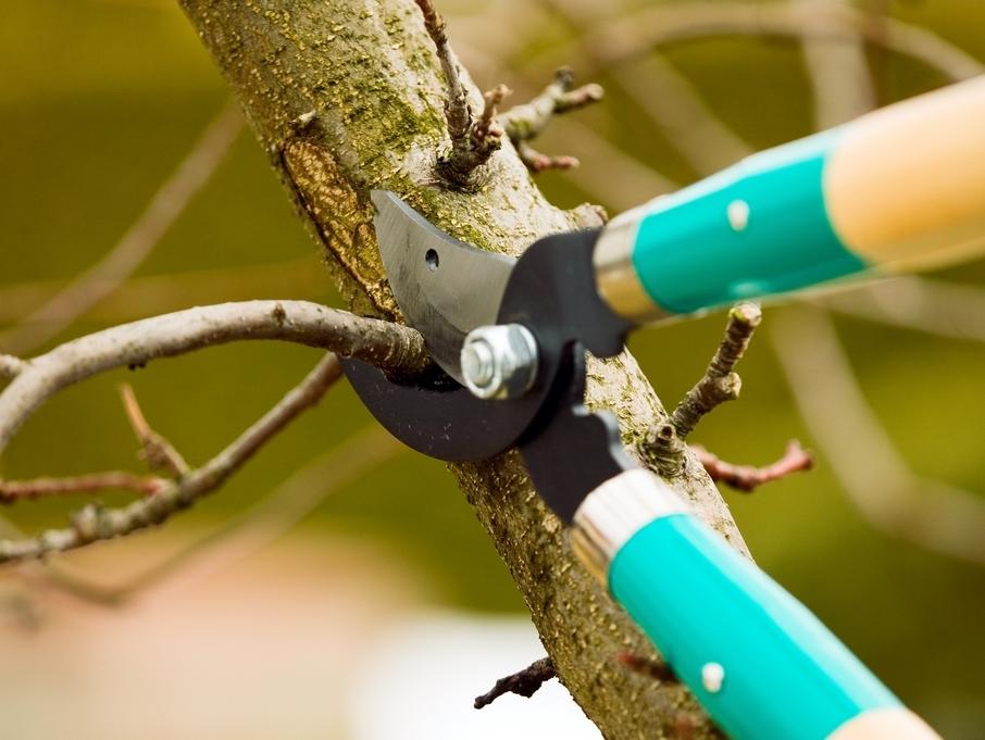 Kácení a prořezávání stromů
