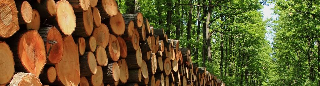 Výkup lesů a dřeva