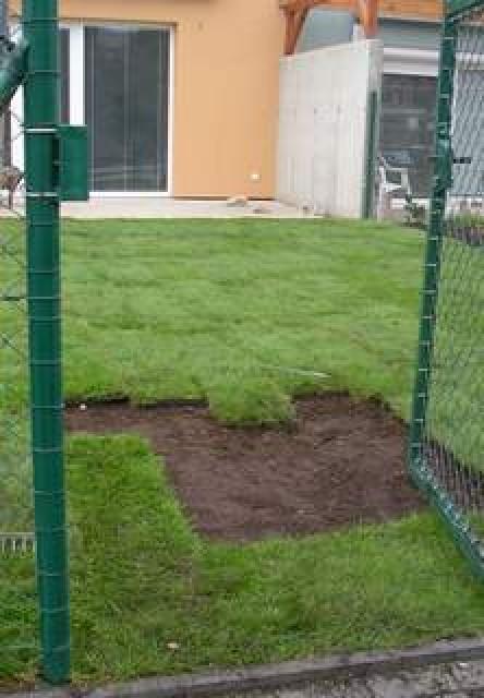Kobercový trávník