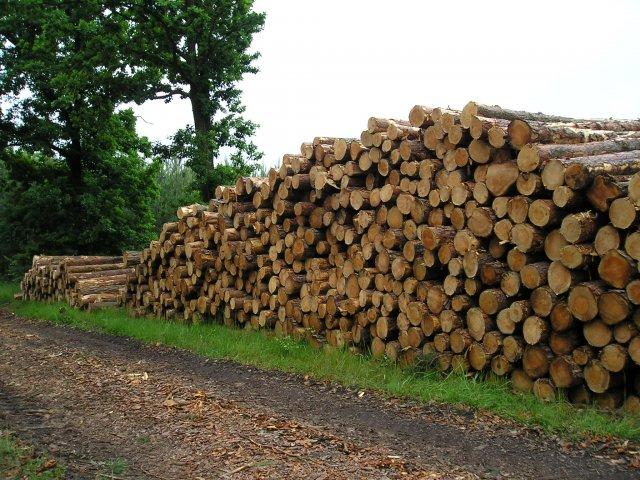Pokácené dřevo