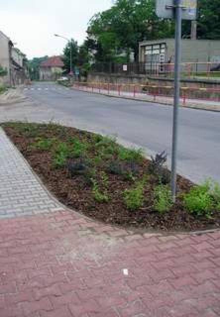 výsadba veřejné zeleně