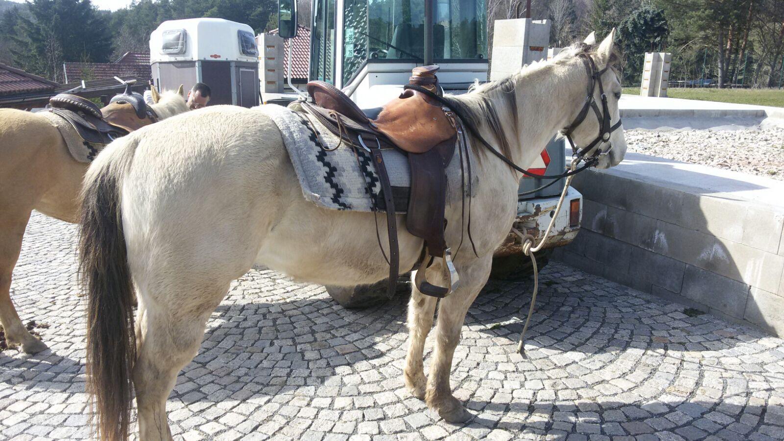 horse Angie