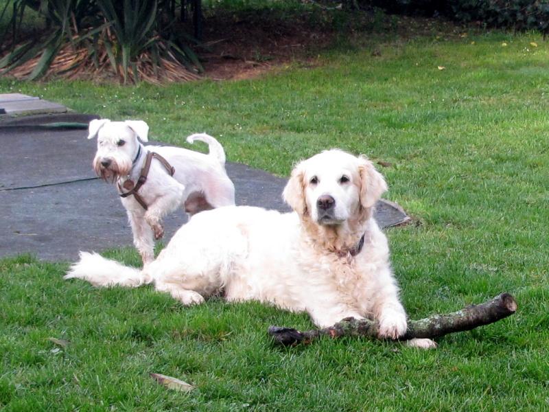psy na zahradě