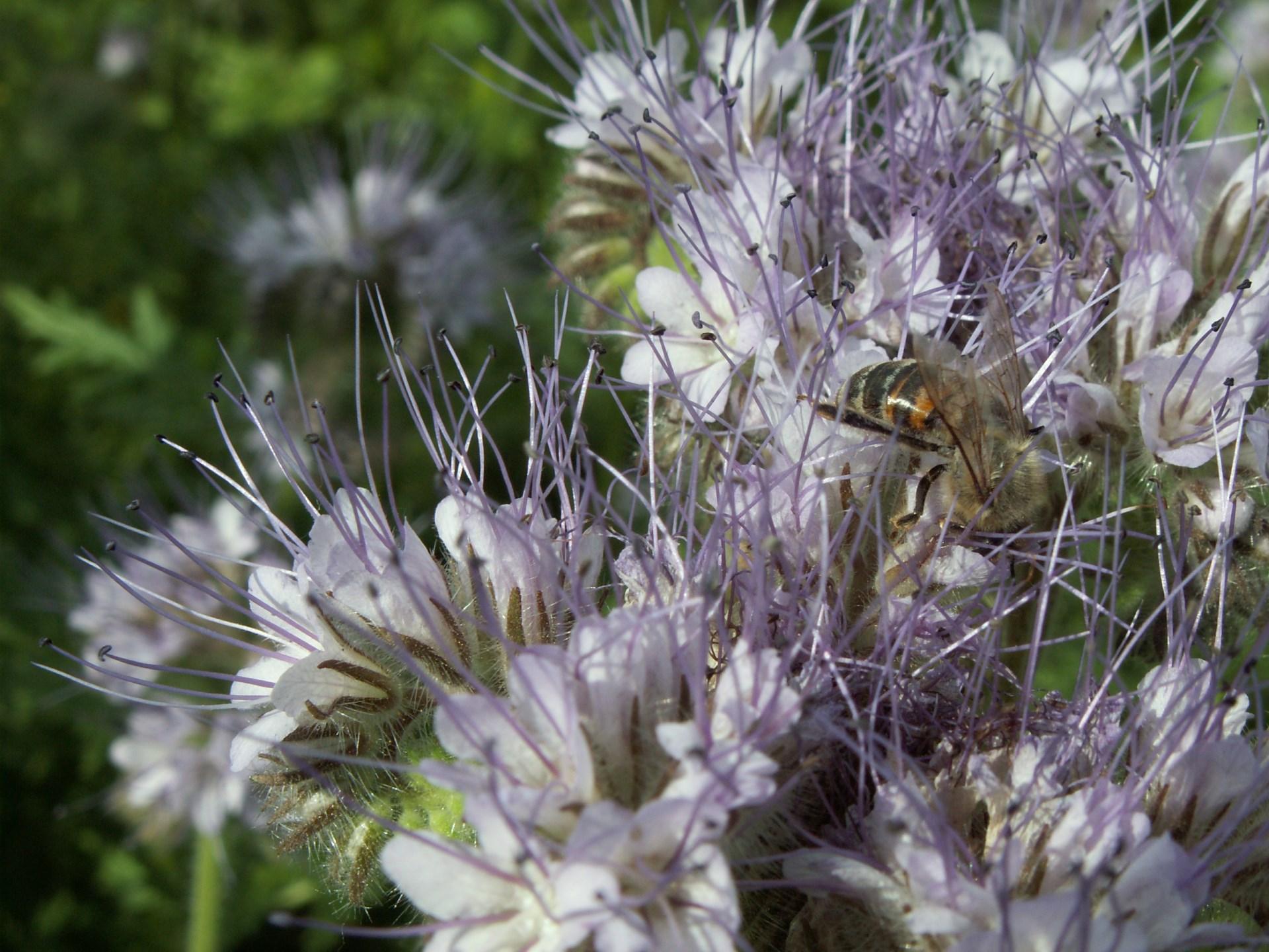 směsi pro včely