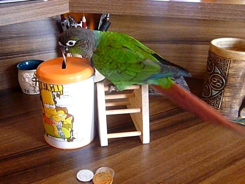Papoušek a kasička