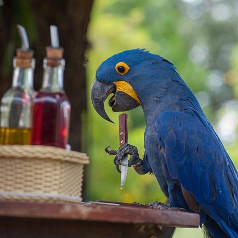 Nebezpečí pro papoušky, papoušek s nožem