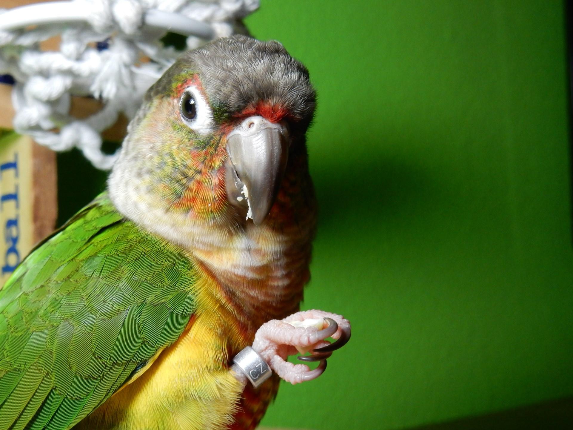 Papoušek a nové složky potravy