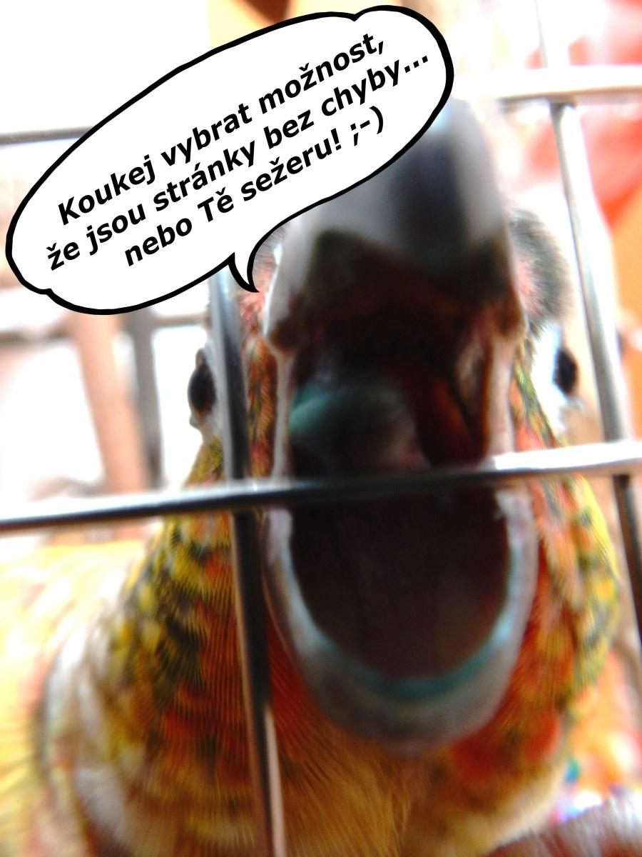 Anketa papoušků