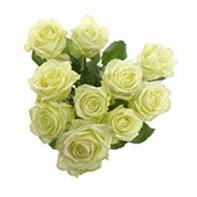 růže smetana
