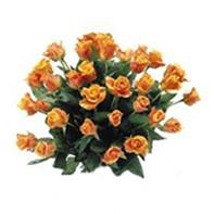 růže oranžové