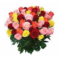růže barevné