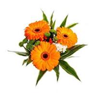 gerbery oranžové