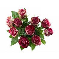 růže žíhaná