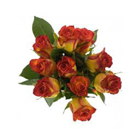 růže žlutooranžová