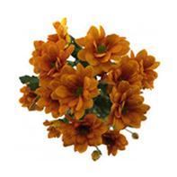 chryzantémy oranžové