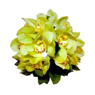 orchidej žlutá