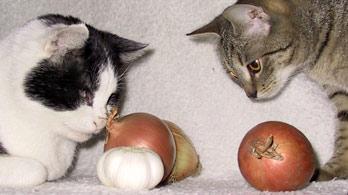 Potraviny toxické pro malá zvířata