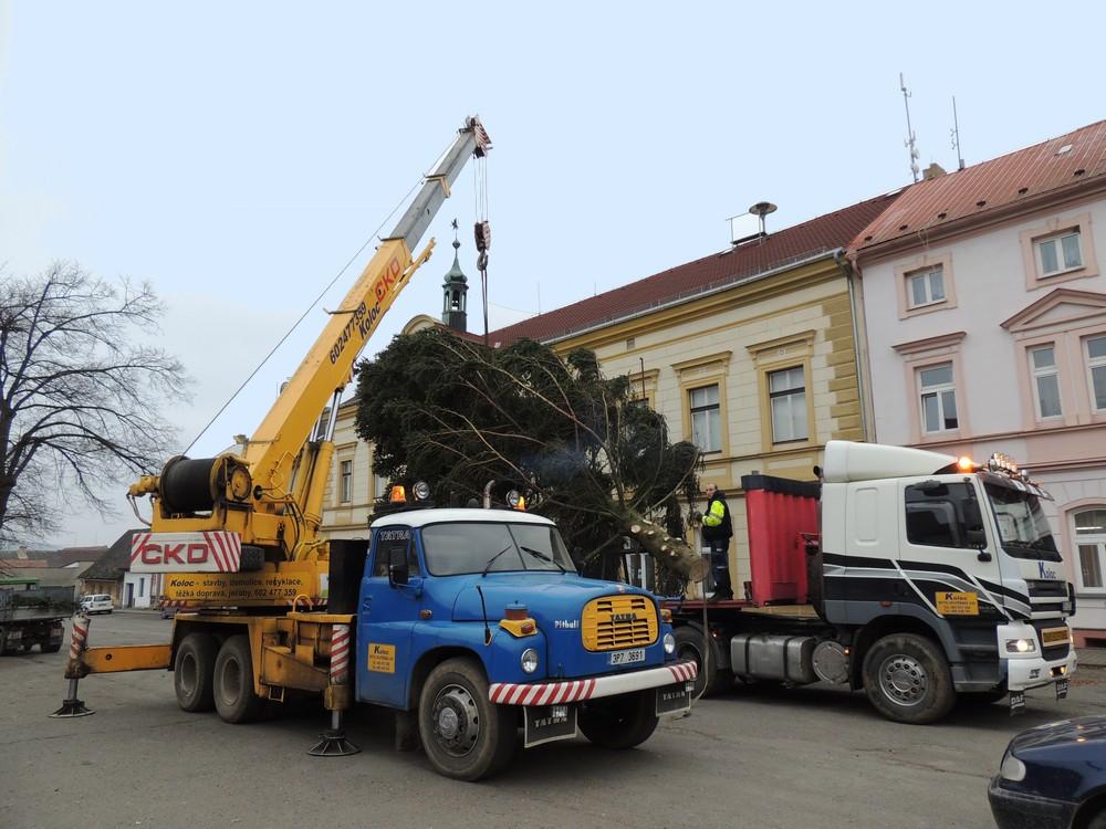 Osazování vánočních stromů