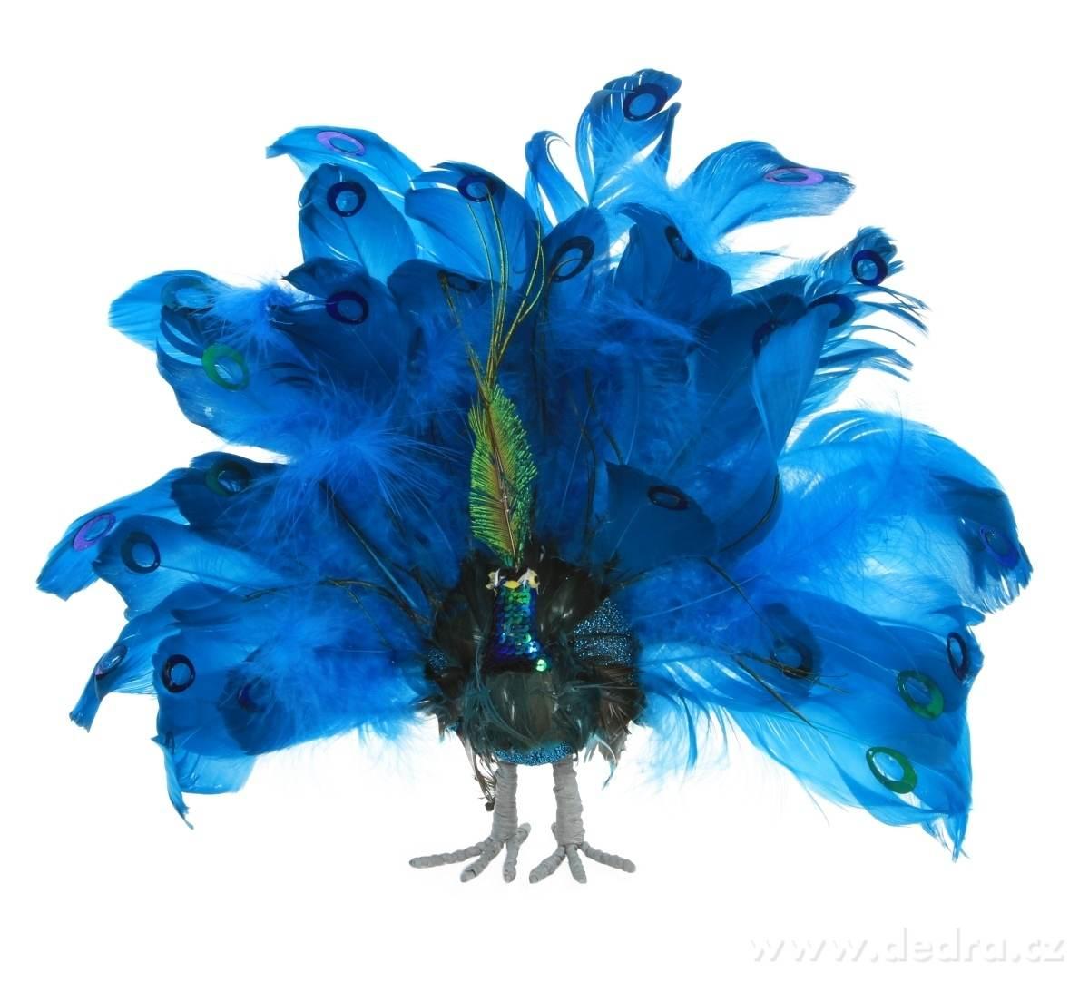 modrý páv